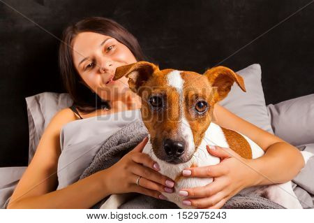 Young beautiful brunette woman plays in bed with her dog. Jack Russell Terrier climbed into bed with her owner in the morning.