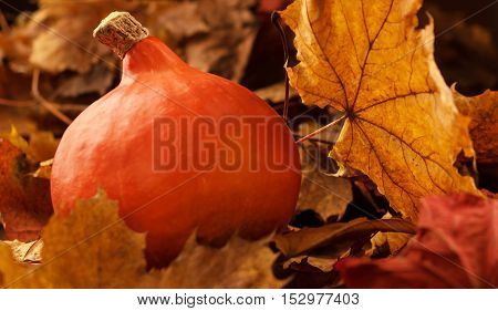 Close up of halloween pumpkin on leaves in woods. autumn Still Life