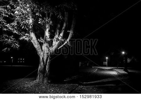 Rural street scene at night black and white with trees lit by lamp post. Empty streets in Autumn