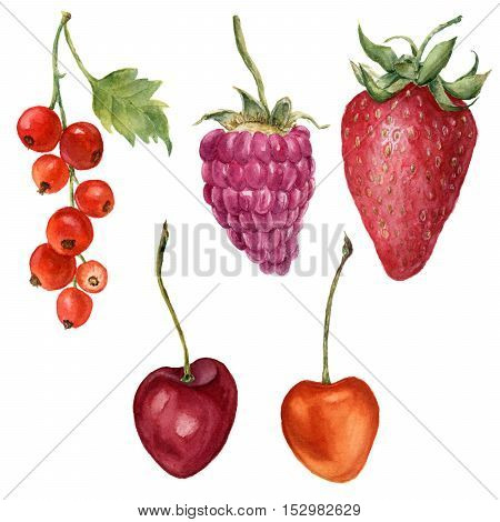 Watercolor summer berries set. Hand painted strawberry, raspberry, cherry and redcurrant isolated on white background. Botanical food design