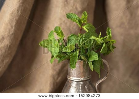 Sprigs of mint in a silver pitcher, beautiful Studio light.