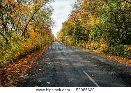 the beatiful autumn road in the day