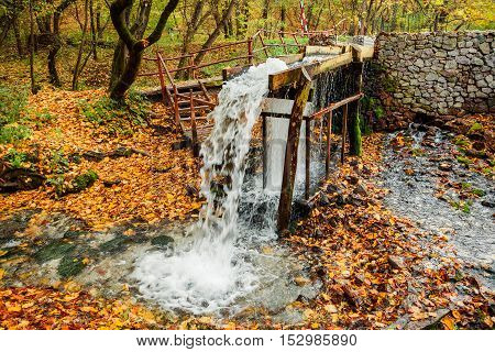 the source of the stream in the autumn forest