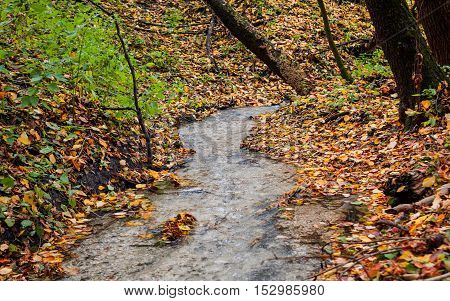 creek in the autumn forest in day