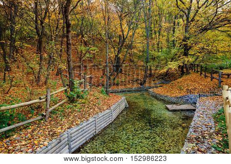 the beatiful autumn park in the day