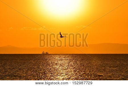 Seagull flying on sea at sunset, silhouette.