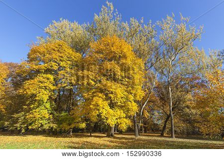 Autumn in the park colorful trees on a background of blue sky