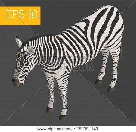 Zebra Isometric Vector Illustration