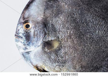 Close-up of black fish on white background
