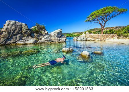 Young attractive man snorkeling in green lagoon near famous pine tree on Palombaggia sandy beach on the south part of Corsica France Europe
