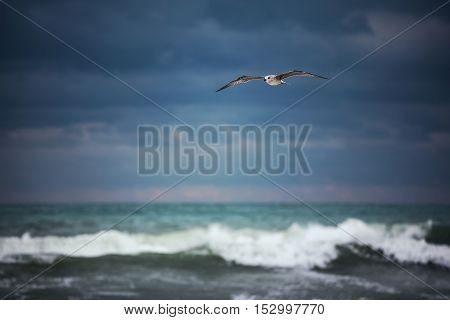 White seagull soaring in the cloudy sky