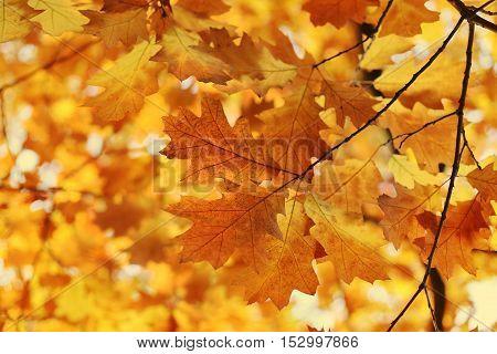 Beautiful autumn branch soft focus nature background