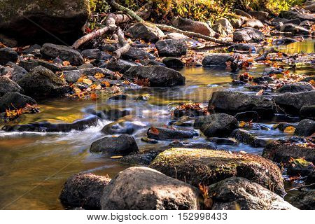 The Flatbrook River in Stokes State Forest, NJ, flows slowly along rocks and Autumn leaves