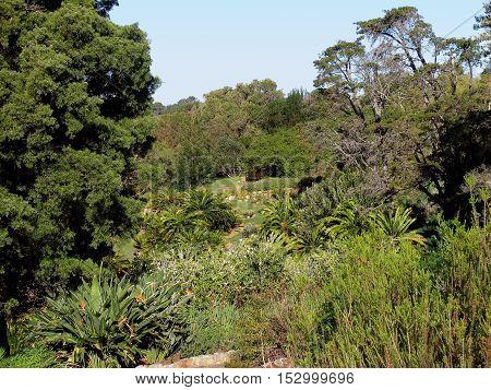 Kirstenbosch Botanical Gardens, Cape Town South Africa 12pll