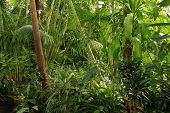 foto of tropical rainforest  - Tropical rainforest jungle - JPG