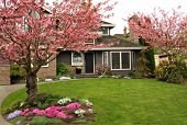 stock photo of planting trees  - Beautiful home with blossoming cherry trees - JPG