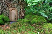 Little wooden fairy tale door in a tree trunk.