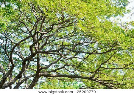 Fresh Tree