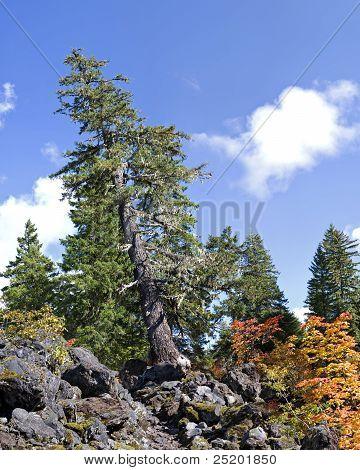 Árvore inclinada na trilha da cachoeira de Proxy