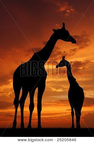 Two giraffes over sunrise