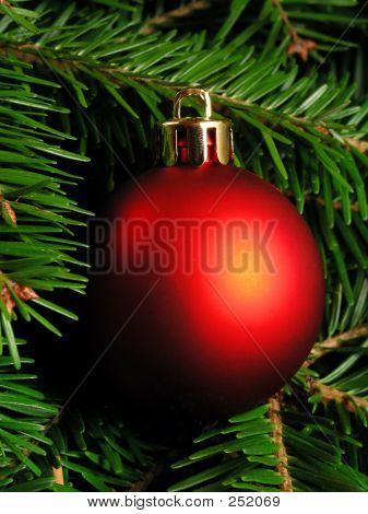 Christmas Tree – Close-up