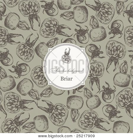 Seamless pattern with briar