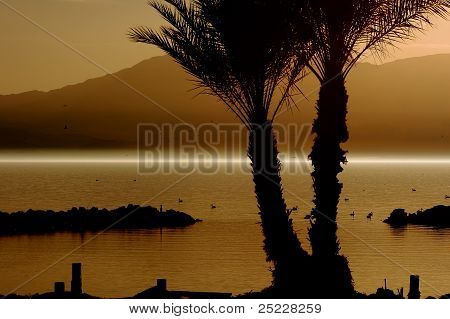 Sunset palm trees and fog at the North Shore of the Salton Sea
