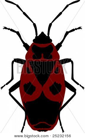 Vector Illustration Beetle Soldier (pyrrhocoris Apterus) On A White Background