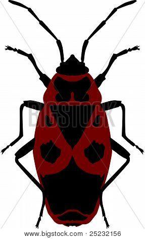 Vector Illustration Beetle Soldier (pyrrhocoris Apterus) On A White Background