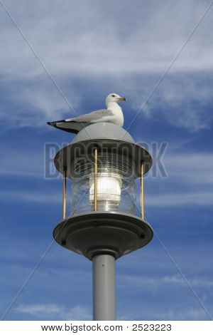 Seagull On Lightpost