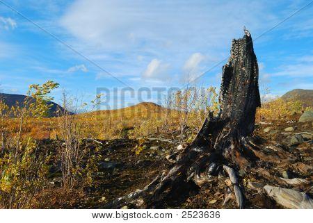 Tree Stump Burnt