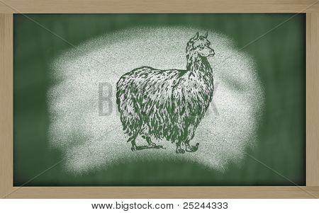 Sketch Of Alpaca On Blackboard (vicugna Pacos)