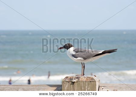 Shorebird On A Post