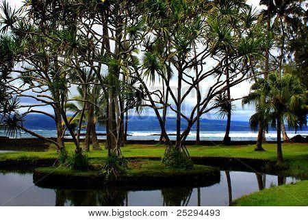 Richardson Ocean Park In Hilo, Hawaii