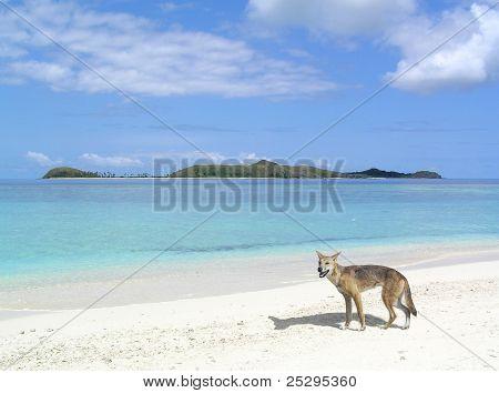 Playa de Dingo