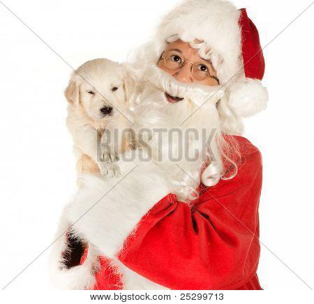 Santa claus bringing a 6 weeks old golden retriever puppy