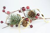 pic of bearberry  - pine branch with cones and red berries on a white background horizontal frame - JPG
