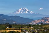 Mount Adams Over Hood River Valley Fruit Orchards In Oregon On A Clear Blue Sky Sunny Day poster