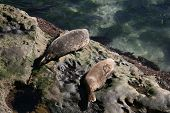 Seals lounging on rocks by the ocean