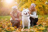 Portrait Of Beautiful Caucasian Senior Couple With Dog poster