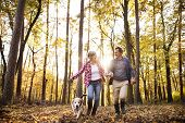 Senior Couple With Dog On A Walk In An Autumn Forest. poster