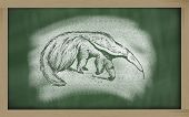 pic of ant-eater  - myrmecophaga tridactyla sketched with chalk on blackboard - JPG