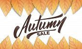 Autumn Sale. Autumn Background Layout With Fall Leves And Hand Lettering. Fall Sale, Promotion, Bann poster