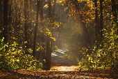 Walking Path In Forest With Beautiful Sunbeams poster
