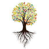 Autumn Silhouette Of A Tree With Colored Leaves. Tree With Roots. Isolated On White Background. Vect poster