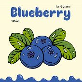 Blueberry Vector Illustration, Berries Images. Doodle Blueberry Vector Illustration In Blue And Gree poster