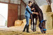 Dark-haired Horsewoman Wearing Dark Riding Boots Petting Dark Horse poster