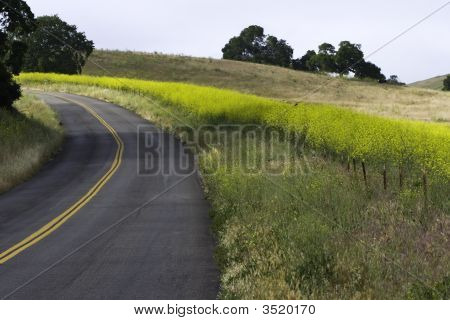 Road Curving Up Hill Thru Rape