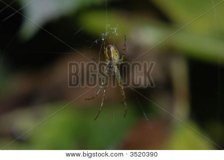 Spider And Spider Web In The Parks