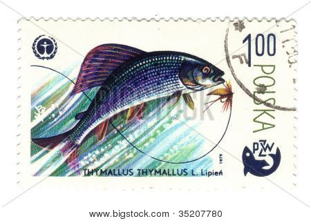 "Poland - Circa 1979: A Postage Stamp Printed In The Poland Shows Image Of The Sea Life , ""thumallus"